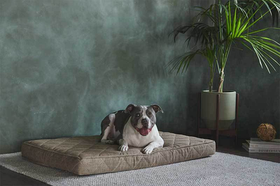 Eco-Friendly Custom New Arrival Wear-Resistant Wholesale Factory Memory Foam Dog Bed